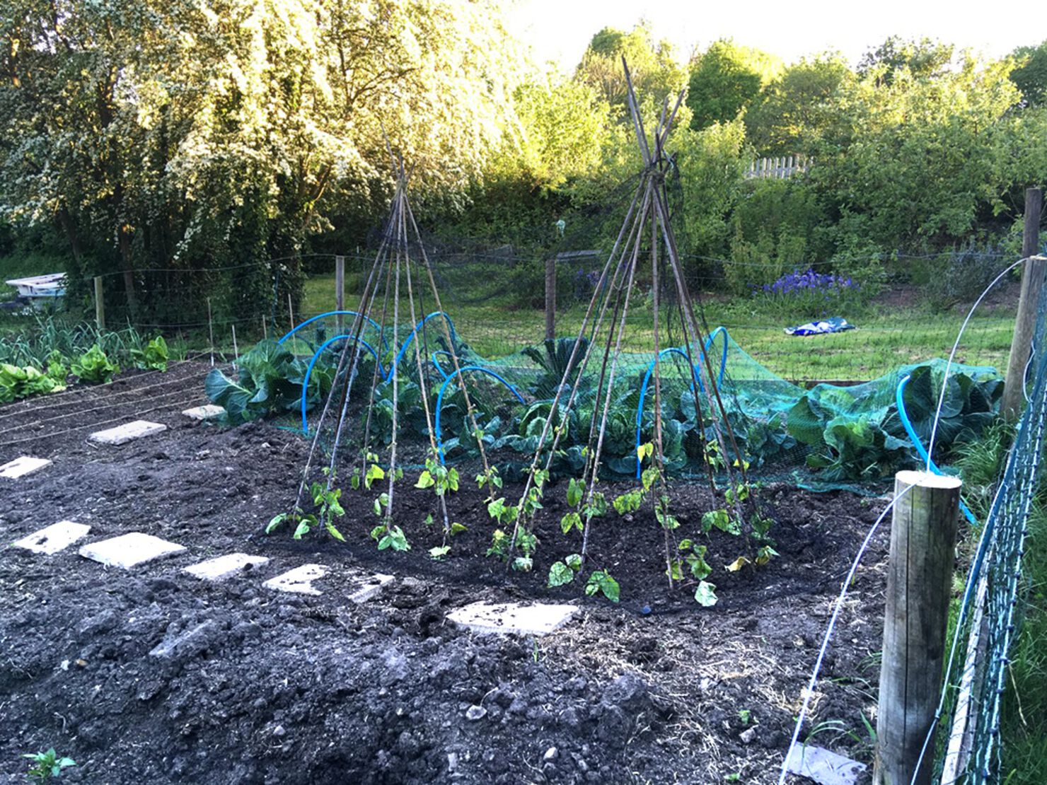Forest garden, kid strimmer and a teepee   Loxley Valley ...